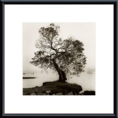 Barewalls Coast Oak Tree Metal Framed Art Print