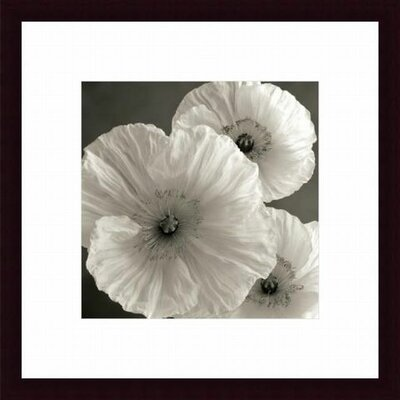 Poppy Study IV Wood Framed Art Print