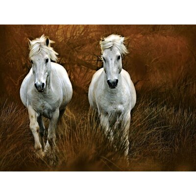 Carmagne in The Reeds Gallery Wrapped Canvas Art