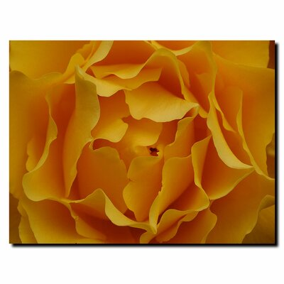 "Trademark Global Hypnotic Yellow Rose by Kurt Shaffer, Canvas Art - 35"" x 47"""
