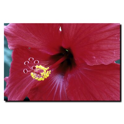 Trademark Global Into The Hibiscus by Kurt Shaffer, Canvas Art - 24&quot; x 32&quot;