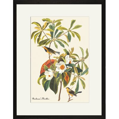 Buyenlarge Bachman's Warbler Framed and Matted Print