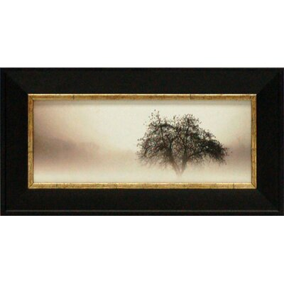 In the Mist I Framed Art