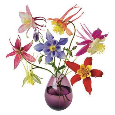 Oots Flat Flowers Window Stickers Originals in Aquilegia