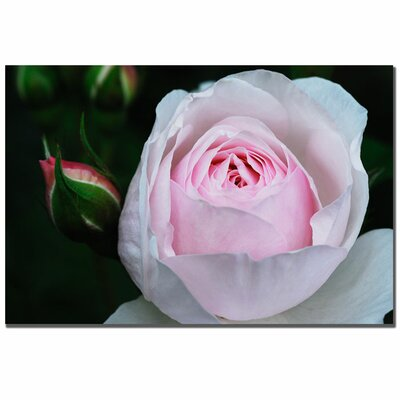 "Trademark Fine Art Pink Rosebud by Kurt Shaffer, Canvas Art - 16"" x 24"""