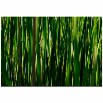"Trademark Fine Art Prairy Grass II by Kurt Shaffer, Canvas Art - 22"" x 32"""