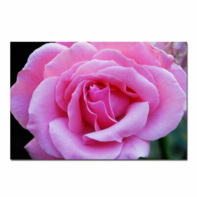 Trademark Art Pink and Beautiful by Kurt Shaffer, Canvas Art - 16
