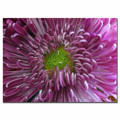 "Trademark Fine Art Pink Flower by Patty Tuggle, Canvas Art - 14"" x 19"""