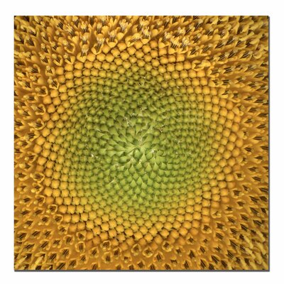 Trademark Art Sunflower by Aiana, Canvas Art - 24