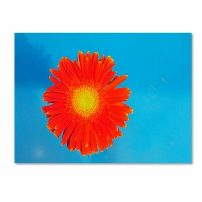 'Orange and Blue' Canvas Art