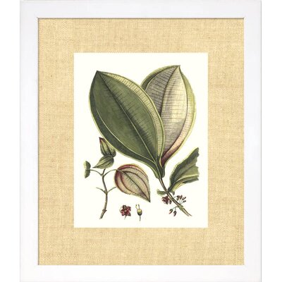 Indigo Avenue Floral Living Buchoz Leaves V Framed Wall Art
