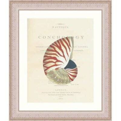 Indigo Avenue Seaside Living Conchology Nautilus Whitewashed Framed Wall Art