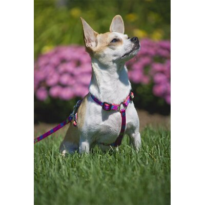 "Lupine Pet Wing It 1/2"" Adjustable Small Dog Roman Harness"