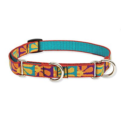 "Lupine Pet Crazy Daisy 3/4"" Adjustable Medium Dog Combo Collar"