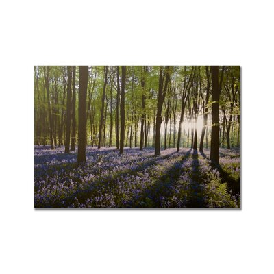 Graham & Brown Bluebell Landscape Printed Canvas Art - 30