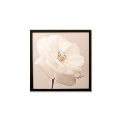 Graham &amp; Brown White Rose Framed Printed Canvas Art - 20&quot; X 20&quot;