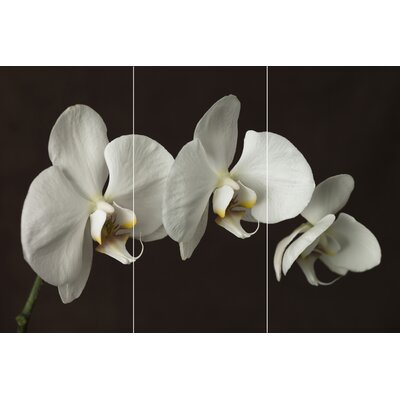 Graham & Brown Orchid Canvas (Set of 3)