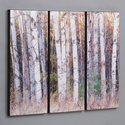 Three Piece Birch Trees in the Fall Laminated Framed Wall Art Set - 36