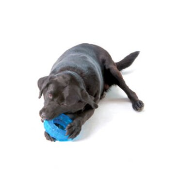 PetStages Orka Tire Dog Toy