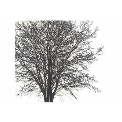 4 Walls Modern Murals Tree Hugger Mural in Black and White