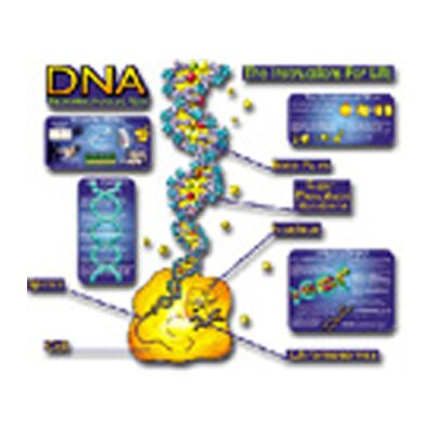 Frank Schaffer Publications/Carson Dellosa Publications Bb Set Dna Understanding The Basics