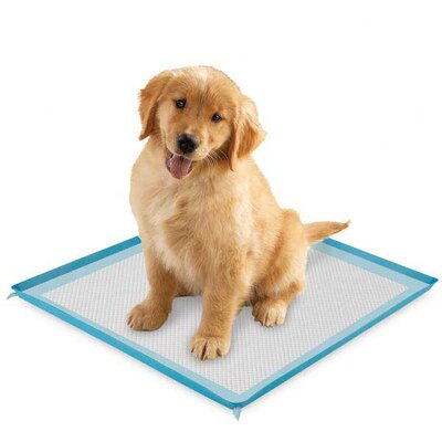 Clear Quest Silicone Puppy Pad Holder