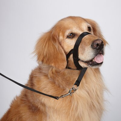 Head Dog Collar in Black