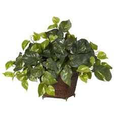 Pothos with Coiled Rope Planter Silk Plant