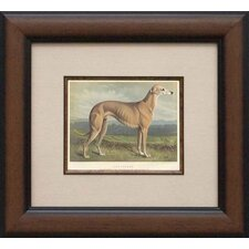 Grey Hound Framed Print
