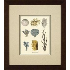 Varieties of Coral Giclee Print