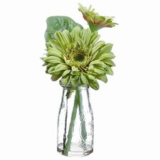 Gerbera Daisy in Glass Vase