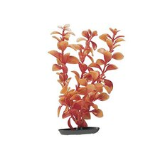 Marina Medium Vibrascaper Ludwigia Plant in Red
