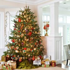 Fresh North Carolina Fraser Fir Christmas Tree 7.5-8  ft