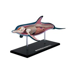 4D-Vision Dolphin Anatomy Model