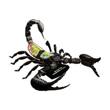 4D-Vision Scorpion Anatomy Model