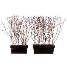 Floral Birch Window Box (Set of 2)