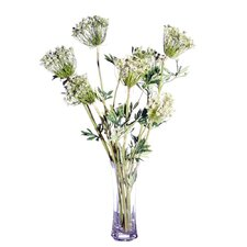 Floral Queen Anne's Lace