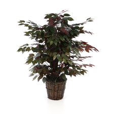 Deluxe 4' Artificial Potted Natural Capensia Tree in Green and Red