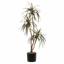 Marginata Deluxe Tree