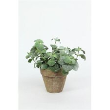 Potted Mint Plant