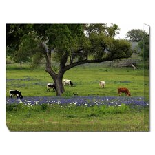 Longhorns Grazing Outdoor Canvas Art