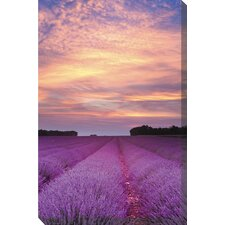 Lavender Sunrise Art Painting