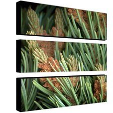 Pinion by Aiana Canvas Art (Set of 3)