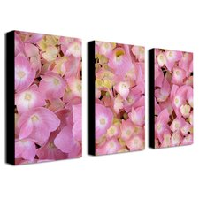 Pink Hydrangea by Kathie McCurdy Canvas Art (Set of 3)