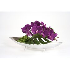 Silk Orchid in Tray