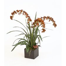 Silk Dendrobium Orchid in Box