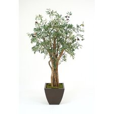 6' Olive Tree in Water Jar with Handles