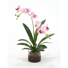 Waterlook Silk Phaleanopsis Orchids in Cylinder Vase