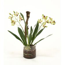 Waterlook Vanda Orchid with Plant in Cylinder Vase
