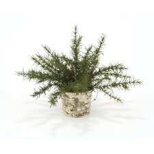 Silk Small Rosemary in Weathered Craven Pot